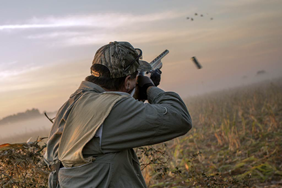 A few tips to have more success on a dove hunt